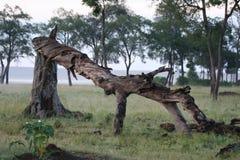 Gevallen boom Stock Afbeeldingen