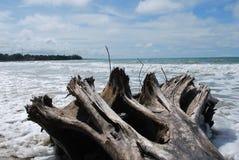 Gevallen boom bij cahuitastrand Stock Foto