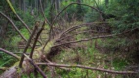 Gevallen boom die in bos rotten stock afbeeldingen