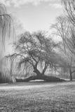 Gevallen boom, die nieuwe takken ontspruiten Royalty-vrije Stock Fotografie