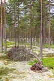 Gevallen boom in een bos Stock Foto