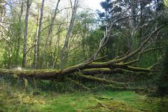 Gevallen boom in een bos Stock Afbeeldingen
