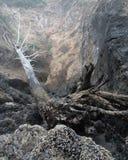 Gevallen boom in Getijdepool at low tide Stock Afbeeldingen