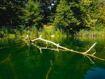 Gevallen boom in het meer stock afbeelding