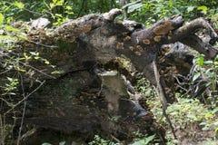 Gevallen boom met rots stock fotografie