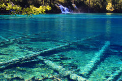 Gevallen boom onder het kleurrijke water Stock Foto's
