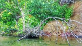 Gevallen boom op het meer Stock Afbeeldingen