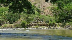 Gevallen boom op rivierbed stock videobeelden