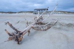 Gevallen boom op strand Stock Foto's