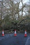 Gevallen boom over weg Stock Afbeelding