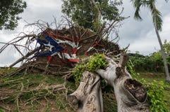 Gevallen boom van Orkaan Maria in San Juan stock afbeeldingen