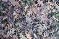 Gevallen boombladeren in het bos royalty-vrije stock foto