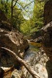 Gevallen boombrug boven rivier in smalle canion Verbazende kloof met muren duizend voet lange en brede rivier Stock Foto