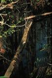 Gevallen Boomstomp royalty-vrije stock foto's
