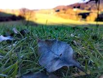 Gevallen de herfstblad en landelijk landschap stock foto's