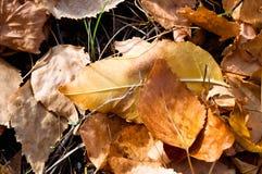 Gevallen de herfstbladeren stock afbeeldingen