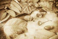 Gevallen de herfstbladeren stock foto's