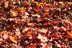 Gevallen de herfstbladeren royalty-vrije stock afbeeldingen