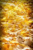 Gevallen de herfstbladeren op een bosweg Royalty-vrije Stock Afbeelding