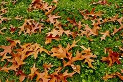 Gevallen de herfstbladeren op het groene gras Royalty-vrije Stock Fotografie