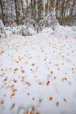 Gevallen de herfstbladeren op sneeuw in het bos Stock Afbeelding