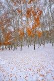 Gevallen de herfstbladeren op sneeuw in het bos Stock Fotografie