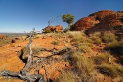 Gevallen droge boomstam bij Koningencanion, Noordelijk Grondgebied, Australië Royalty-vrije Stock Afbeelding