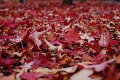 Gevallen droge kleurrijke bladeren Stock Fotografie