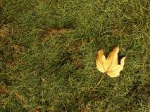Gevallen esdoornblad Bederf geoogst gras in grote groene geurhoop in hoek van tuin Stock Foto