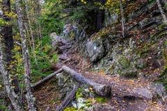 Gevallen gekleurd de boomboomstammen en herfst leaved langs een wandelingstrai royalty-vrije stock afbeeldingen
