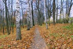 Gevallen gele bladeren in het park in het landgoed van Telling Leo Tolstoy in Yasnaya Polyana Stock Foto's