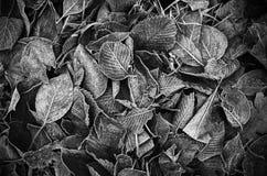 Gevallen herfst zwart-witte bladeren, Royalty-vrije Stock Foto's