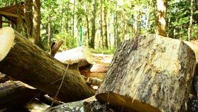Gevallen houten De vernietiging van bossen Doen ineenstorten bomen in bos 88 stock video