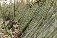 Gevallen houten omheining Royalty-vrije Stock Foto's