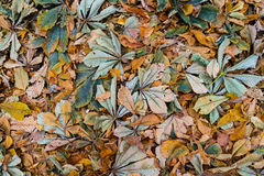 Gevallen kastanje` s bladeren Royalty-vrije Stock Afbeelding