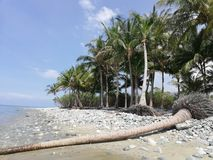 Gevallen palmboomstam op tropisch bekiezeld zandig strand op Mindoro, Filippijnen royalty-vrije stock foto