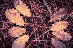 Gevallen pijnboomnaalden en gestorven bladeren op grond stock foto's