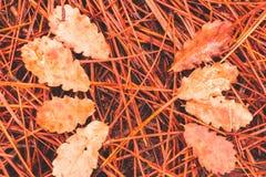 Gevallen pijnboomnaalden en gestorven bladeren op grond royalty-vrije stock foto