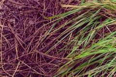 Gevallen pijnboomnaalden en gestorven bladeren op grond royalty-vrije stock foto's