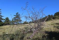 Gevallen pine-wood stock foto's