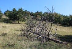 Gevallen pine-wood stock afbeelding