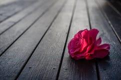 Gevallen rode bloem royalty-vrije stock afbeeldingen