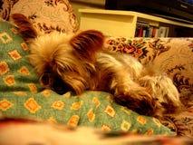 Gevallen in slaap Stock Foto