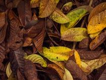 Gevallen tropische bladeren ter plaatse Royalty-vrije Stock Foto's