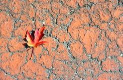 Gevallen verlof met typische de herfstkleuren stock foto