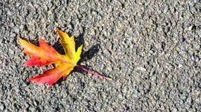 Gevallen verlof met typische de herfstkleuren stock foto's