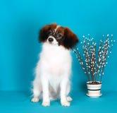 Gevallen zit met een wilgentak Witte hond met een rood hoofd op een blauwe achtergrond stock foto
