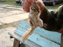 Gevangen aardeekhoorn Wilde dieren royalty-vrije stock foto