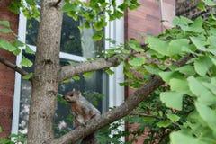 Gevangen! De eekhoorn ziet me! royalty-vrije stock foto's