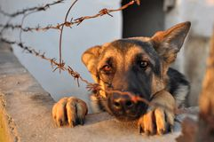 Gevangen Hond Royalty-vrije Stock Foto's